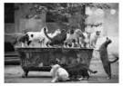 Albrecht Schnabel  -  Die Verzauberte Badewanne - Postkaarten-set -  B2771-1