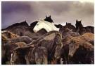Laurens Aaij  -  L. Aaij/Een kudde paarden - Postkaarten-set -  PS1022-1