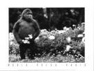 Leigh Henningham  -  Melbourne's Mzuri - Postkaarten-set -  PS343-1