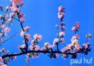 Paul Huf (1924-2002)  -  Paul Huf/Spring in Arles/55*80 - Posters-set -  PS484-1