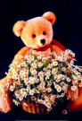 Mirja de Vries  -  TB flowers - Postkaarten-set -  PS577-1
