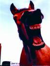 Peter Huls  -  P.Huls/Het lachend paard/45*60 - Posters-set -  PS737-1