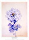 Piet Mondriaan (1872-1944)  -  Mondriaan/ Chrysant      50*70 - Posters-set -  PS827-1
