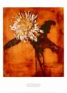 Piet Mondriaan (1872-1944)  -  Mondriaan/ Chrysant      50*70 - Posters-set -  PS830-1